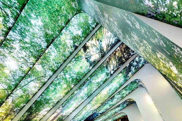 """""""Natur: Eine Geschichte von Wald und Menschen von Holzer Kobler Architekturen. Vor 40 Jahren entstand im Bayerischen Wald der erste deutsche Nationalpark.""""  Natur: Eine Geschichte von Wald und Menschen Natur Eine Geschichte von Wald und Menschen Architektur und Design Wohn DesignTrend 03"""