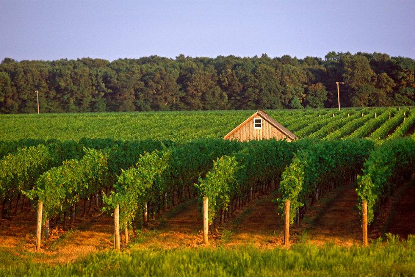 rajs-080205003e3 Weinregionen 7 luxuriöse geheime Weinregionen Rajs 080205003E3