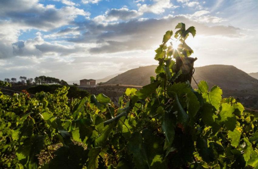 img Weinregionen 7 luxuriöse geheime Weinregionen img