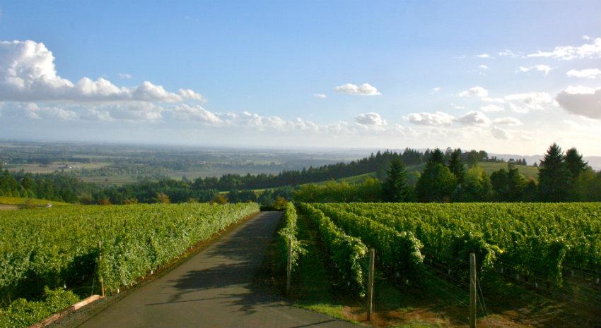 oregon-wine-country-tours-willamette-valley-vino